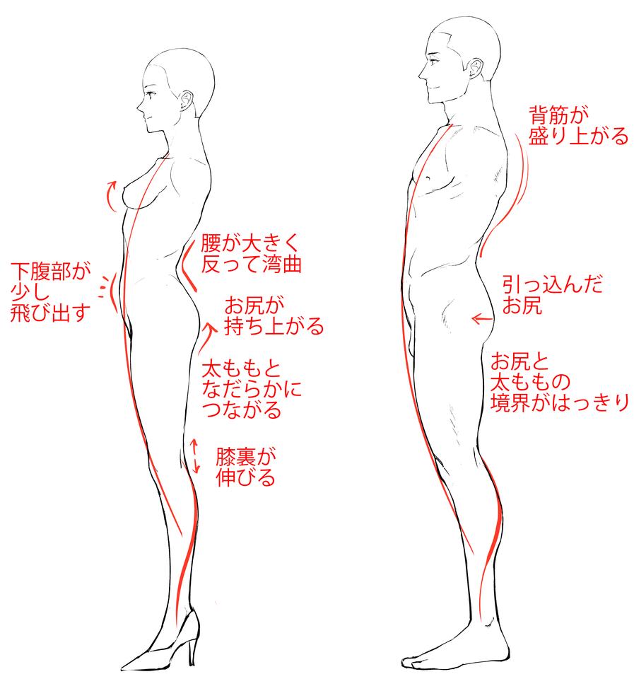 図解 すぐにわかる男女の特徴の付け方 描き分け イラスト マンガ描き方ナビ