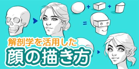 解剖学を活用した顔の描き方
