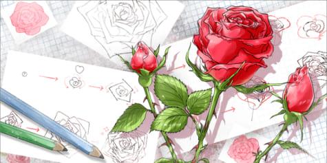 Comment Dessiner Une Rose Art Rocket