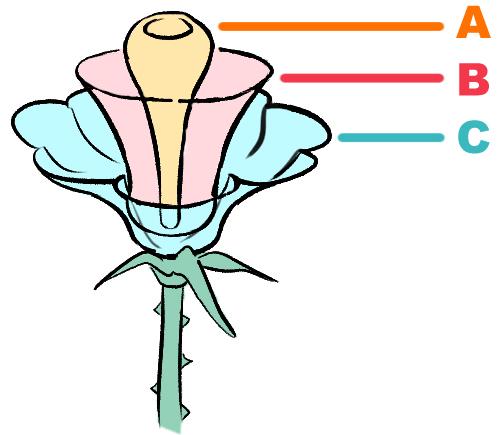 Zeichnen rose mit dornen ► Rosen