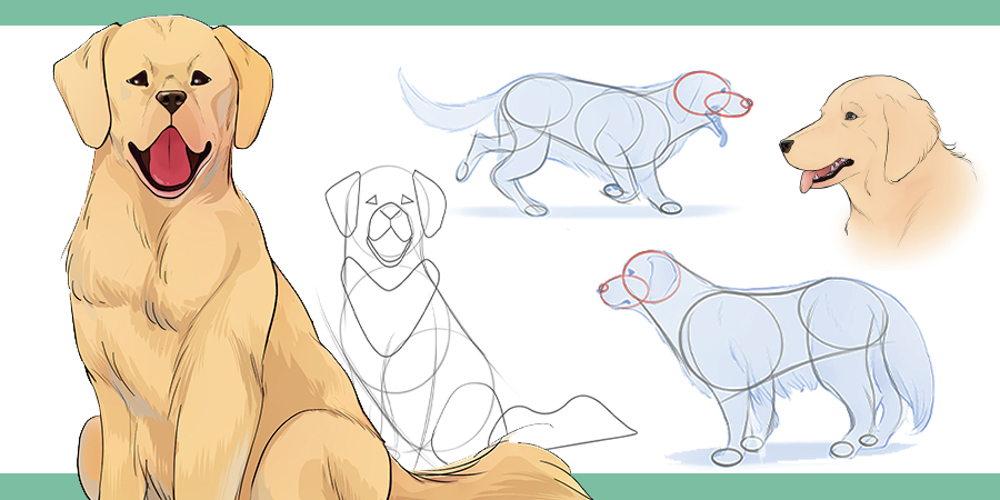 How To Draw Dogs Art Rocket