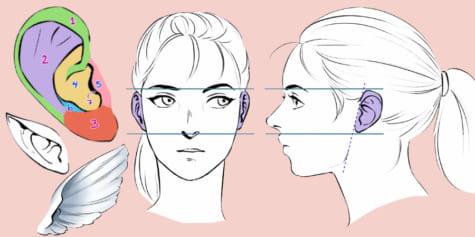 ¡Guía para dibujar orejas!