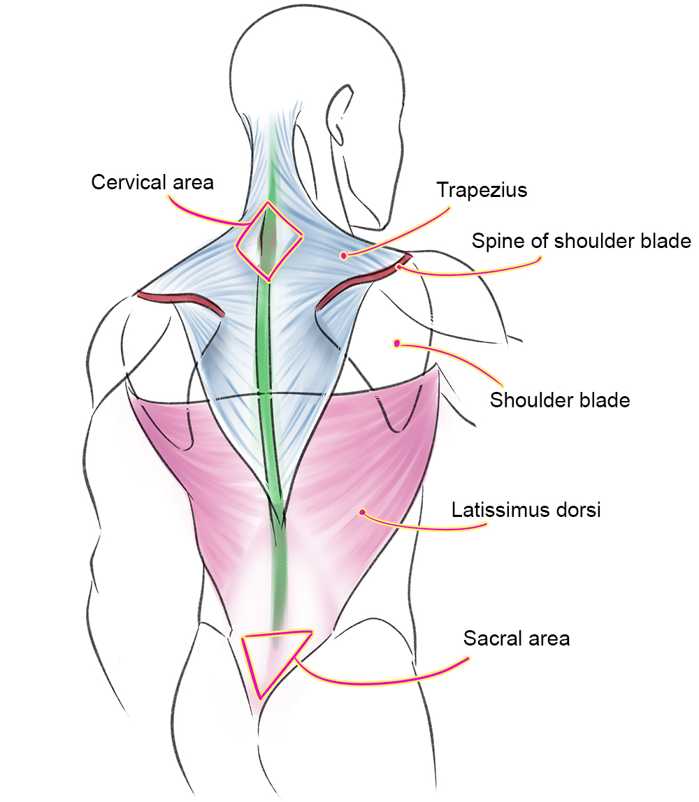 Muscles Of The Human Body Art Rocket Раз ты посмотрел сюда, то пожалуйста. muscles of the human body art rocket