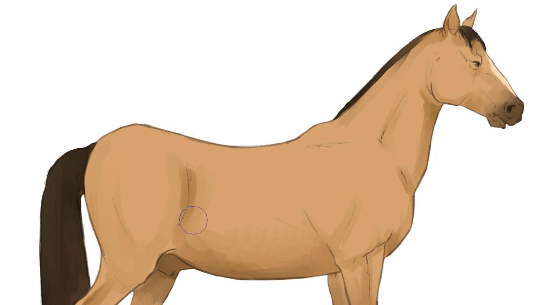 簡単な図形から始めよう リアルな馬の描き方 イラスト マンガ描き方ナビ